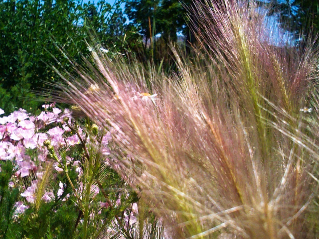 wild grasses 2